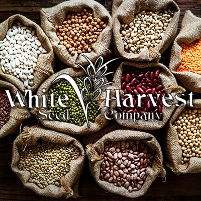 Heirloom Seeds for a Healthier Harvest
